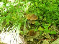 Esc Micologica Floresta 2011
