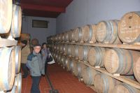 In Cantina Vivera 2011